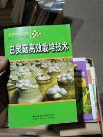 白灵菇高效栽培技术