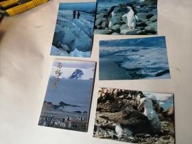 明信片;南极风光...10枚