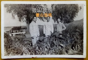 民国老照片:民国36年——南京玄武湖,鸡冠花开得正艳。有背题。