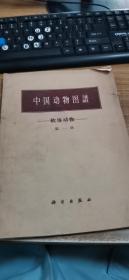 中国动物图谱—软体动物(第一册)