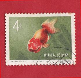 特38金鱼12-4红虎头