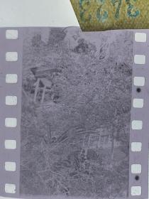 3423 年代老照片底片  园林建筑