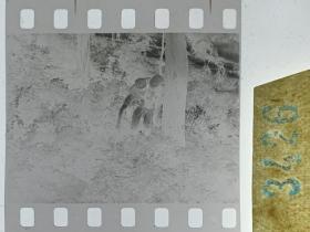 3426 年代老照片底片  长影拍戏