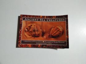 ANCIENT SEA CREATURES(书名以图片为准)