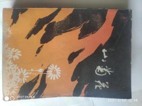 山菊花 (上)