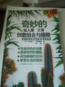 奇妙的仙人掌 兰草创意组合与插栽