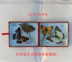 珍稀盒装蝴蝶标本:枯叶蛱蝶 紫斑变色蝶 三角粉蝶 二尾蛱蝶