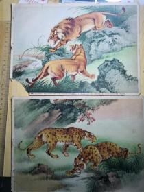 戈湘岚作,豹,狮,共两张合售(16开)