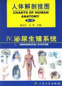 人体解剖挂图--泌尿生殖系统 郭光文,王序 主编 9787117038058