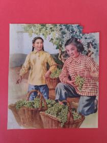 五六十年代水彩画 摘葡萄