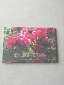 国色天香富贵牡丹  明信片