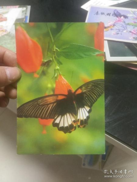 老版明信片散片 蝴蝶與花