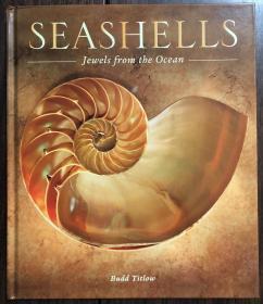 Seashells: Jewels from the Ocean  贝壳:海洋珍宝