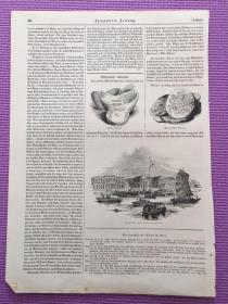 大清中国题材版画 德国画报 单张 两页(87-88正反面)