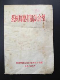 茶树短穗扦插法介绍(1958年)