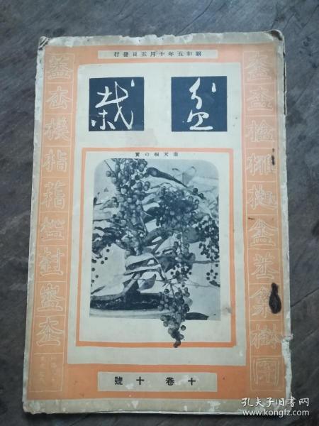 盆栽(十卷、十号)