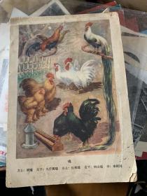 封面有各种鸡的图片,内页是手抄医方,怎样防止气喘,搭脉,止痢片用法,平喘丸等一册手抄有26面,其它空白的