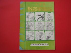大安县野生经济植物调查报告