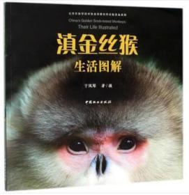 全新正版:滇金丝猴生活图解 于凤琴著摄 中国林业出版社