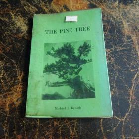 THE  PINE  TREE    看图