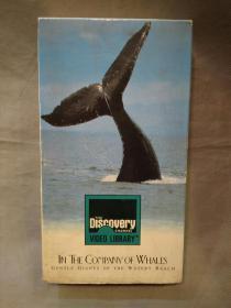 录像带:IN THE CoMPANY OF WHALES(水世界里温柔的巨人)  GENTLE GIANTS OF TUE WATERY REALM