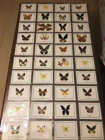 早期塑封蝴蝶标本40张
