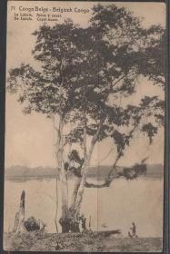 比属刚果邮资明信片,1913年邮寄至比利时,柯巴河岸捕鱼的渔民