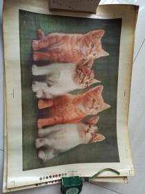 中国山东济南瓷用花纸厂印制,瓷用贴画。四只小猫