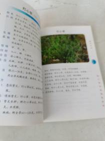 龙湫本草 (第2辑)