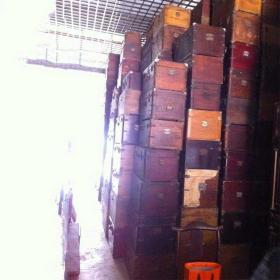 老樟木箱二手樟木箱旧樟木箱,1500个旧樟木箱老樟木箱
