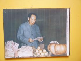 文革后期宣传照片《1956年毛泽东在看农民写给他的报喜信)【照相纸印刷的照片】