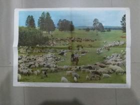 教学挂图:内蒙古草原牧场