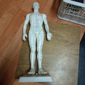针灸经穴模型(50公分人体模型)老货质量好