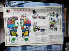 足部反射区挂图(长:75.2cm,宽:52cm)彩图