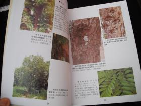2011年西泠印社出版发行的----16开大本彩图----工具书---【【名贵木材鉴赏图典】】-----少见