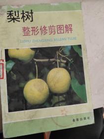 梨树整形修剪图解