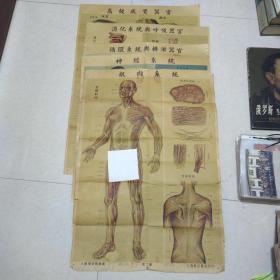 医学解剖图:上海新亚书店印行(肌肉系统,神经系统,循环系统与排泄器官,消化系统与呼吸器官,高级感觉器官)