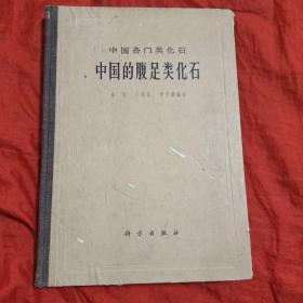 中国各门类化石  中国的腹足类化石(精装)