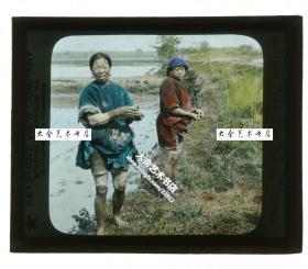清代民国玻璃幻灯片-----清末民国广东广州海珠区河南岛上种植水稻的农妇二人,刚刚在田地中劳作完成