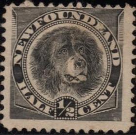 英联邦邮票C,纽芬兰1887年狗,交通运输游泳救援守卫工作宠物 犬