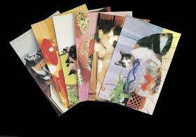 猫  明信片 6枚全 不带邮资