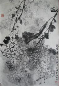 温州—单眉月绣球