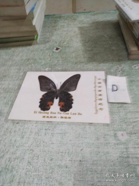 蝴蝶标本:西双版纳 橄榄坝(带塑封护套)