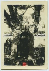 """民国时期东北满洲辽宁沈阳奉天""""诚则灵""""祈愿树老照片,12×8.2厘米, 泛银。"""
