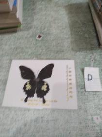 蝴蝶标本: 西双版纳  橄榄坝 (带塑封护套)