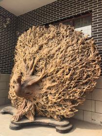 旷世奇材,天然孔雀开屏,孔雀又叫招财鸟,在古代有代表喜事降临之寓意,用一块影子木雕刻而成,绝无半点拼接,适合于大型公共场所与别墅。具有很高的欣赏与收藏价值。尺寸高260,宽300。