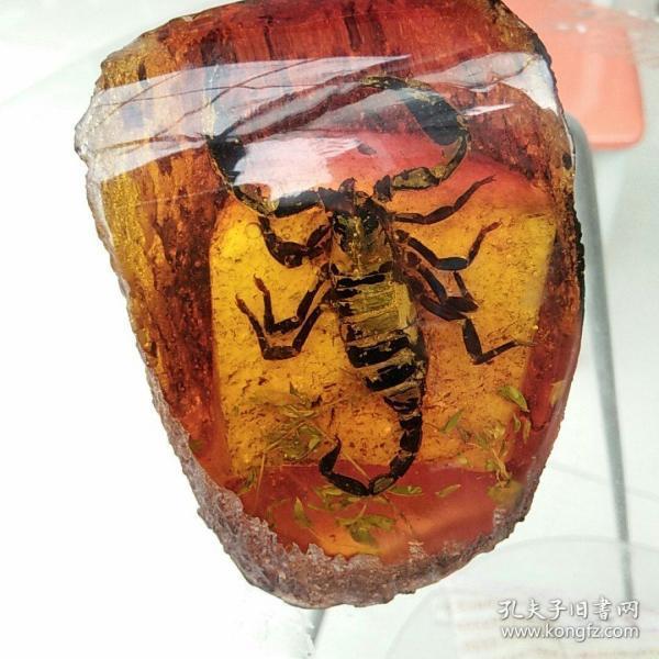琥珀,蝎珀,毒霸天下,9.5×7.5×6.5cm,品自鉴