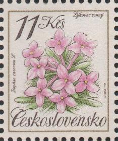 捷克斯洛伐克邮票,1991年植物花卉中草药,瑞香,雕刻版,一枚价