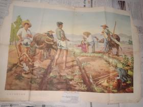 五十年代宣传画(小伙子 到晚看谁强)1955年