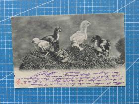 欧源片邮--美国欧洲百年贴邮票实寄明信片-复古手账-收藏集邮-外国邮政彩色明信片